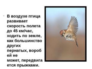 В воздухе птица развивает скорость полета до 45 км/час, ходить поземле, как