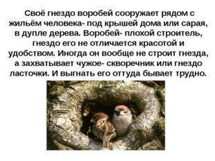 Своё гнездо воробей сооружает рядом с жильём человека- под крышей дома или с