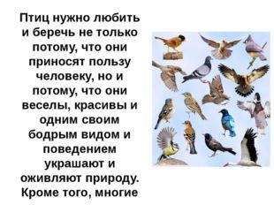 Птиц нужно любить и беречь не только потому, что они приносят пользу человеку