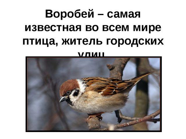 Воробей – самая известная во всем мире птица, житель городских улиц.