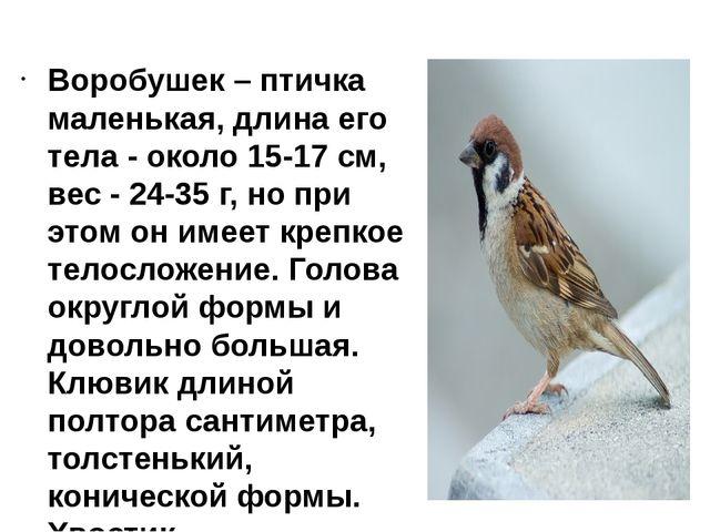 Воробушек – птичка маленькая, длина его тела - около 15-17 см, вес - 24-35 г...