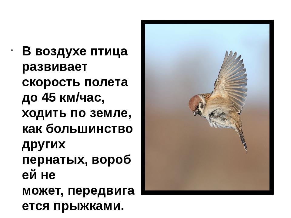 В воздухе птица развивает скорость полета до 45 км/час, ходить поземле, как...
