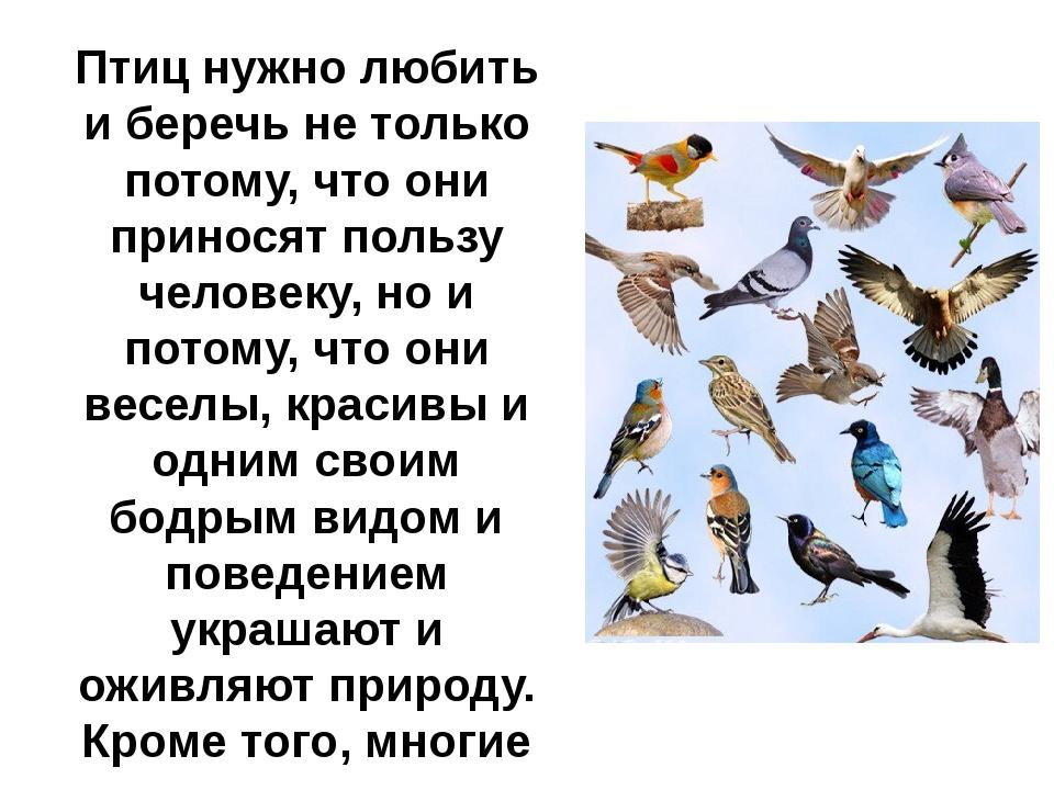 Птиц нужно любить и беречь не только потому, что они приносят пользу человеку...
