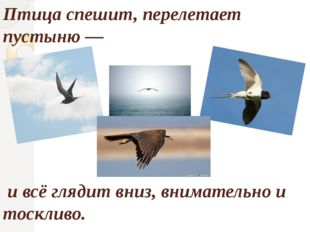 Птица спешит, перелетает пустыню — и всё глядит вниз, внимательно и тоскливо.
