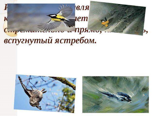 И вот она расправляет свои крылья — и бросается вдаль стремительно и прямо, к...
