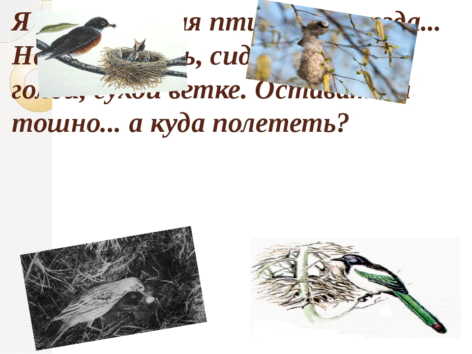 Я как одинокая птица без гнезда... Нахохлившись, сидит она на голой, сухой ве...