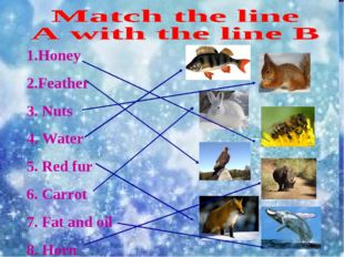1.Honey 2.Feather 3. Nuts 4. Water 5. Red fur 6. Carrot 7. Fat and oil 8. Horn