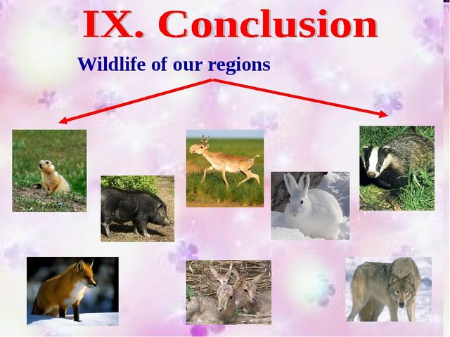 Wildlife of our regions
