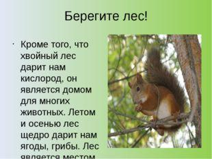 Берегите лес! Кроме того, что хвойный лес дарит нам кислород, он является дом