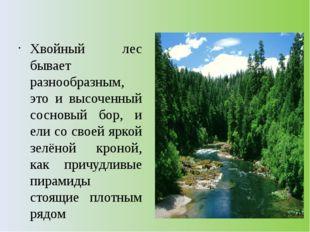 Хвойный лес бывает разнообразным, это и высоченный сосновый бор, и ели со св