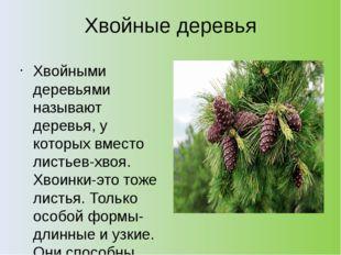 Хвойные деревья Хвойными деревьями называют деревья, у которых вместо листьев