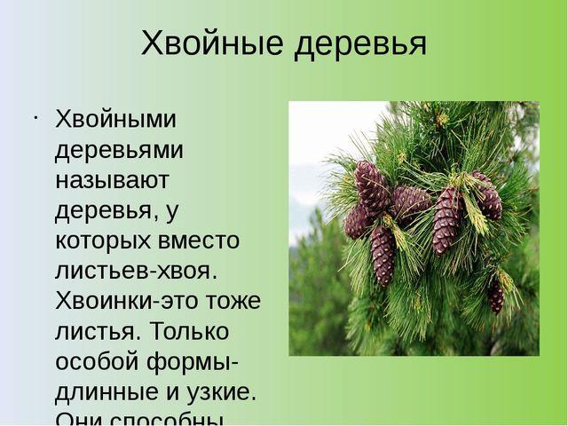 Хвойные деревья Хвойными деревьями называют деревья, у которых вместо листьев...