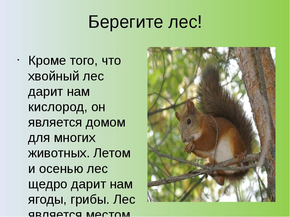 Берегите лес! Кроме того, что хвойный лес дарит нам кислород, он является дом...