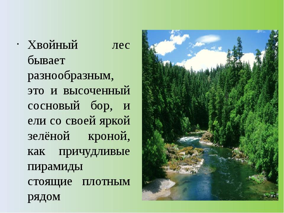 Хвойный лес бывает разнообразным, это и высоченный сосновый бор, и ели со св...