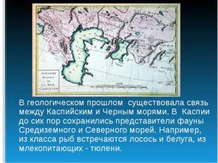 В геологическом прошлом существовала связь между Каспийским и Черным морями.