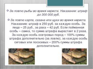 За ловлю рыбы во время нереста. Наказание: штраф до 300 000 руб. За ловлю кар