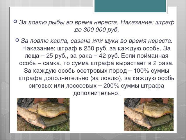 За ловлю рыбы во время нереста. Наказание: штраф до 300 000 руб. За ловлю кар...