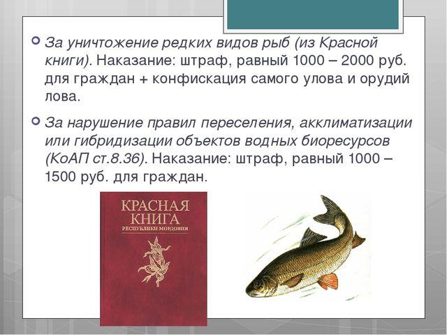 За уничтожение редких видов рыб (из Красной книги). Наказание: штраф, равный...