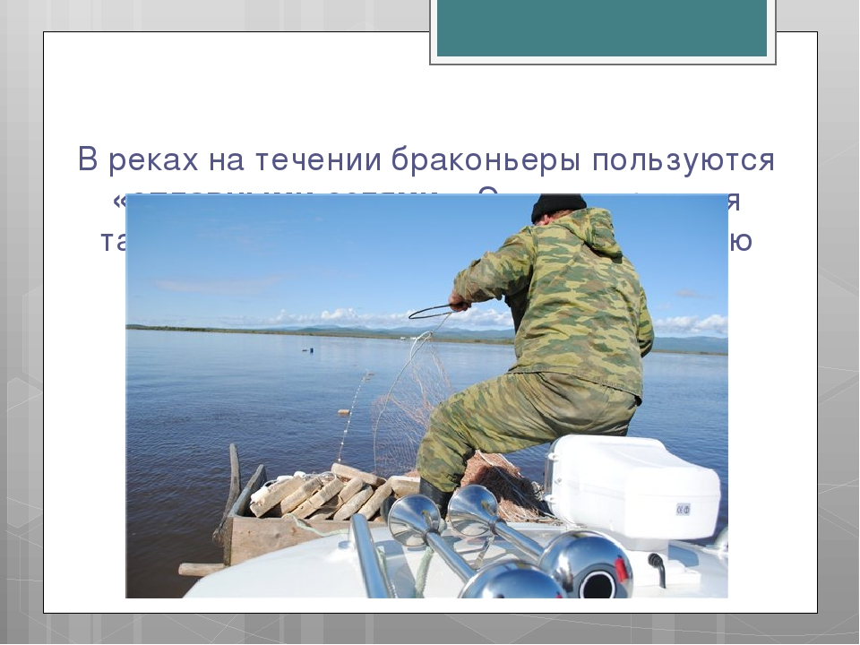 В реках на течении браконьеры пользуются «сплавными сетями». Эта конструкция...