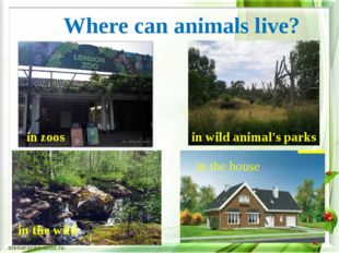 Where can animals live? in zoos in wild animal's parks in the wild in the house