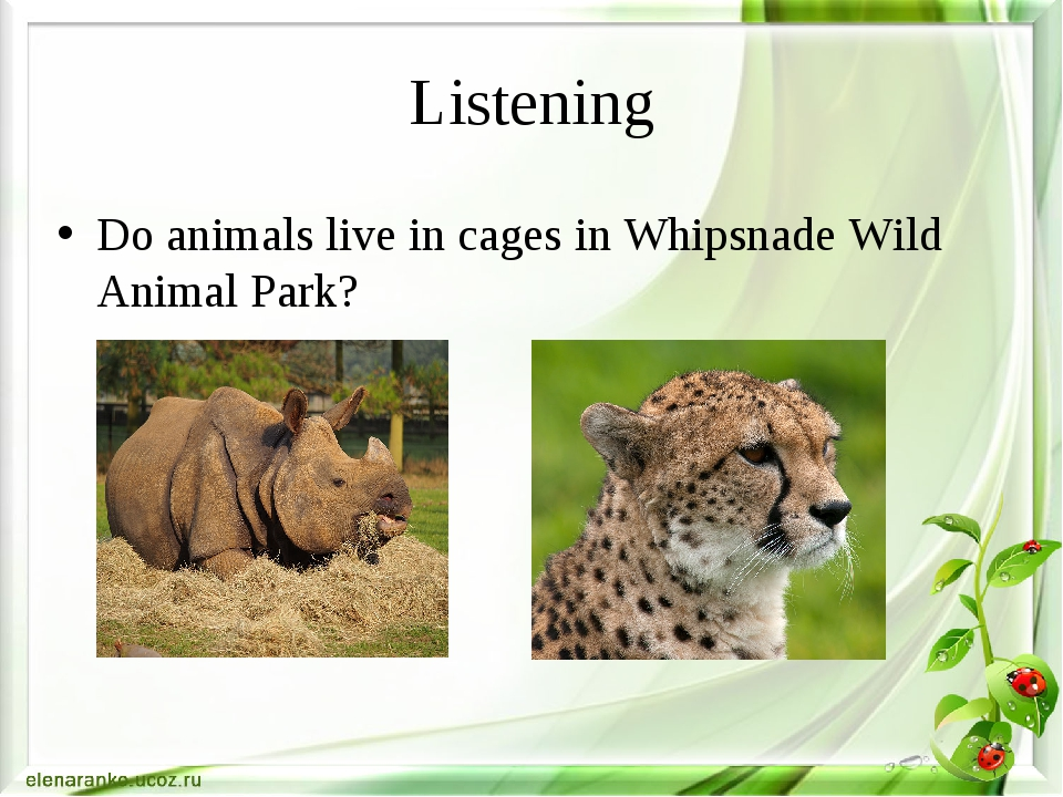 Listening Do animals live in cages in Whipsnade Wild Animal Park?