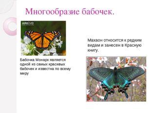 Многообразие бабочек. Бабочка Монарх является одной из самых красивых бабочек