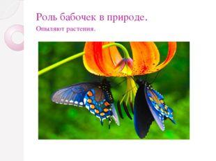 Роль бабочек в природе. Опыляют растения.