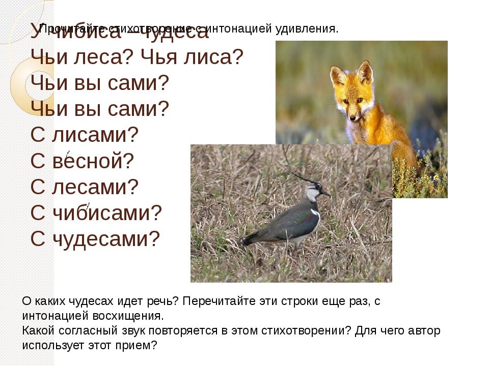 У чибиса –чудеса Чьи леса? Чья лиса? Чьи вы сами? Чьи вы сами? С лисами? С ве...