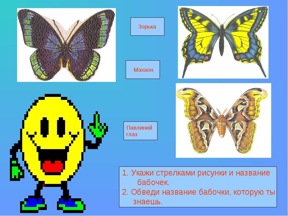 1. Укажи стрелками рисунки и название бабочек. 2. Обведи название бабочки, к...