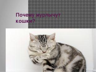 Почему мурлычут кошки?