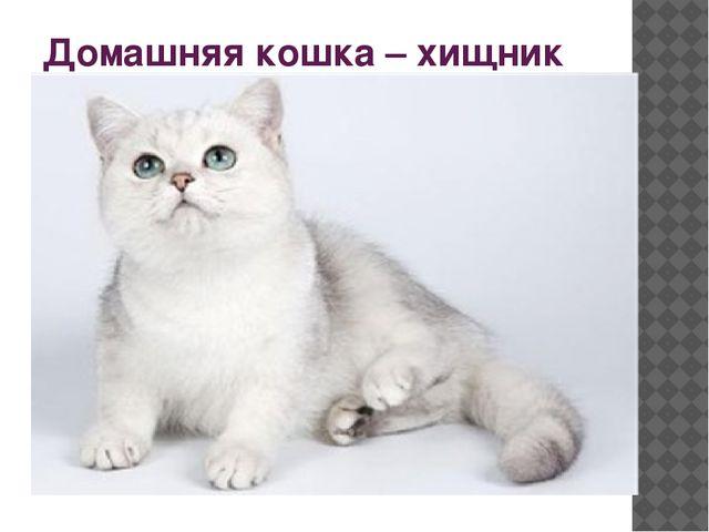 Домашняя кошка – хищник