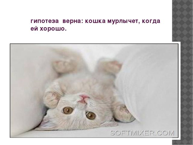 гипотеза верна: кошка мурлычет, когда ей хорошо.