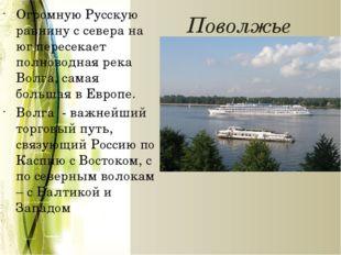 Поволжье Огромную Русскую равнину с севера на юг пересекает полноводная река
