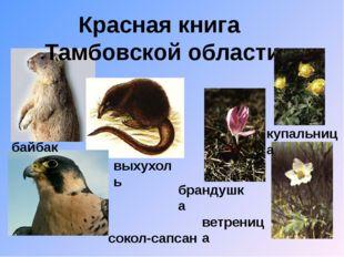 Красная книга Тамбовской области байбак сокол-сапсан выхухоль брандушка ветре