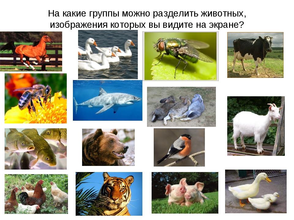 На какие группы можно разделить животных, изображения которых вы видите на эк...