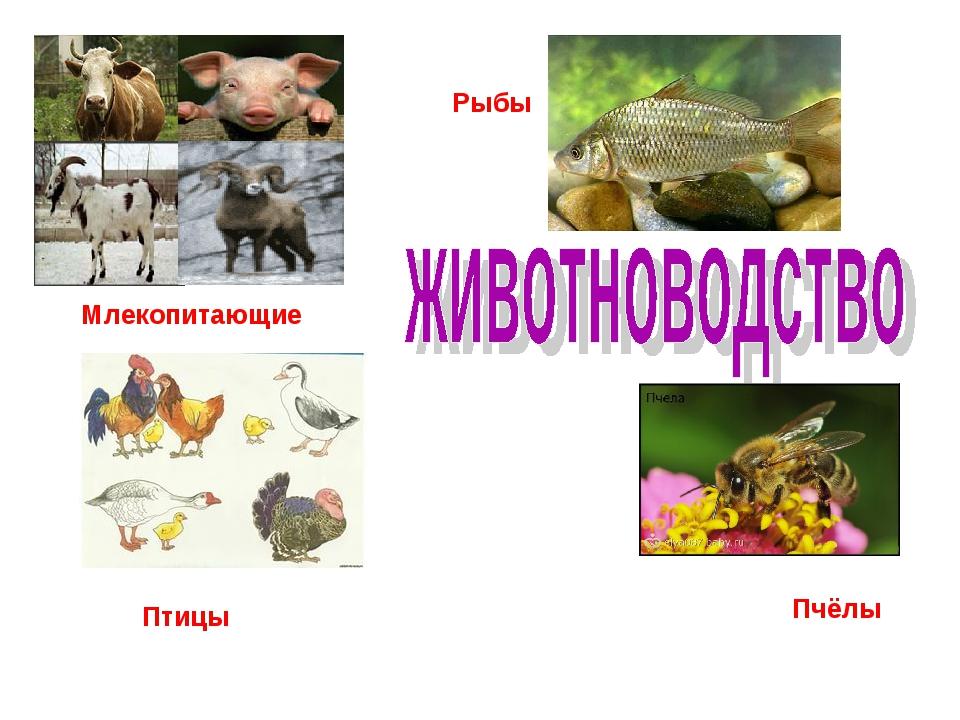 Млекопитающие Рыбы Пчёлы Птицы