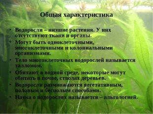 Общая характеристика Водоросли – низшие растения. У них отсутствуют ткани и о