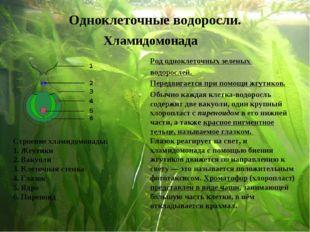 Род одноклеточных зеленых водорослей. Передвигается при помощи жгутиков. Стро