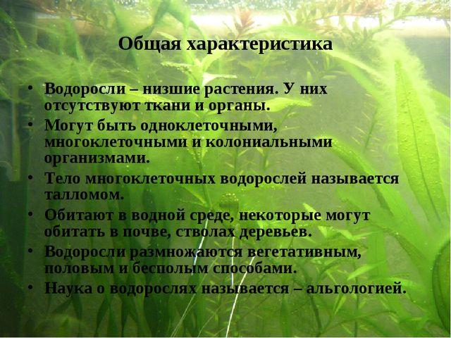 Общая характеристика Водоросли – низшие растения. У них отсутствуют ткани и о...