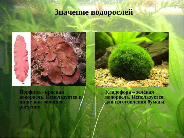 Порфира - красная водоросль. Используется в пищу как овощное растение. Клад...