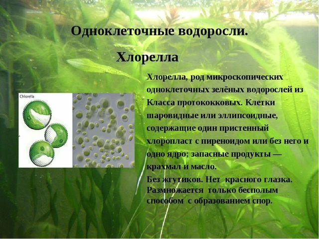 Одноклеточные водоросли. Хлорелла Хлорелла, род микроскопических одноклеточны...