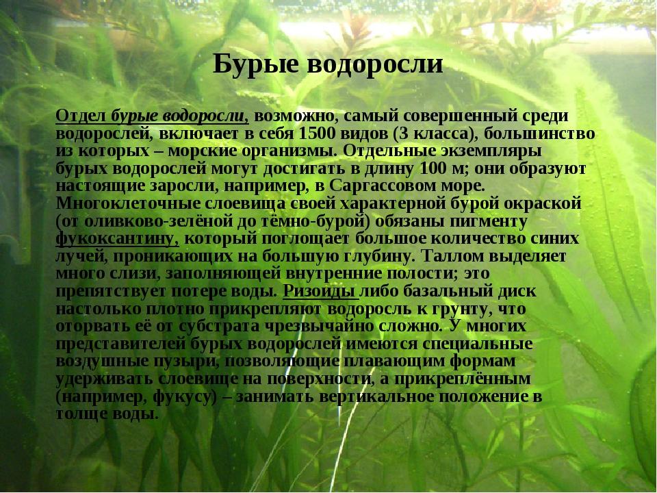 Бурые водоросли Отдел бурые водоросли, возможно, самый совершенный среди водо...