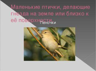 Маленькие птички, делающие гнезда на земле или близко к её поверхности. Пеночки