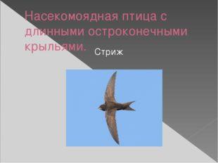 Насекомоядная птица с длинными остроконечными крыльями. Стриж