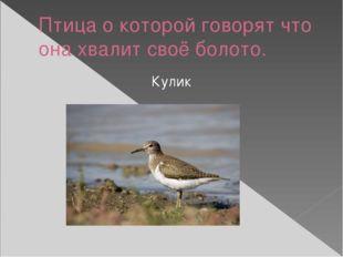 Птица о которой говорят что она хвалит своё болото. Кулик