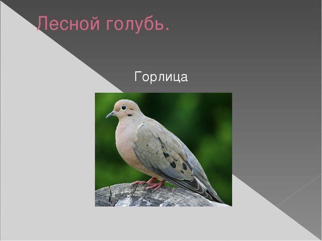 Лесной голубь. Горлица