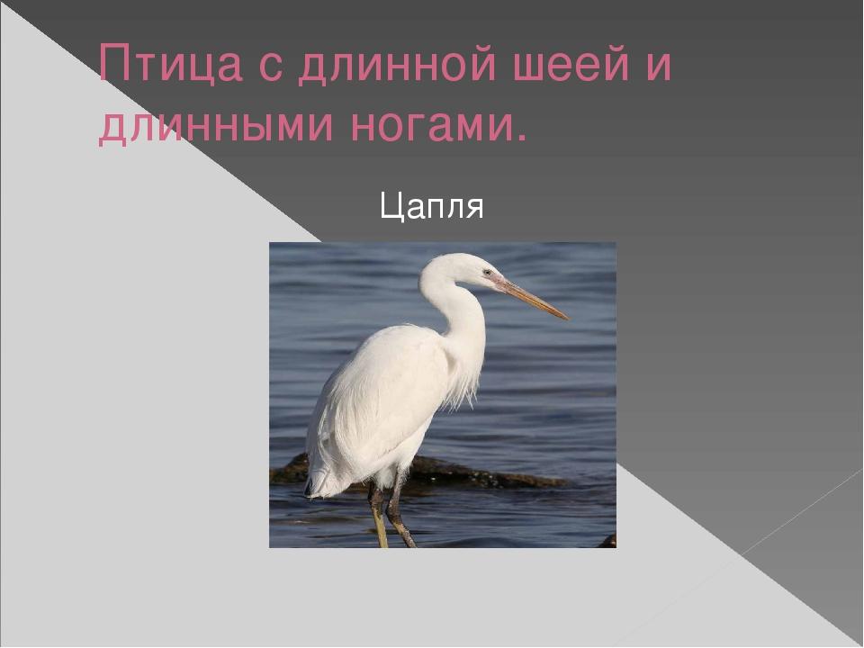Птица с длинной шеей и длинными ногами. Цапля