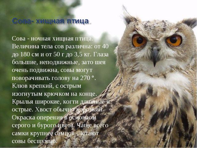 Сова - ночная хищная птица. Величина тела сов различна: от 40 до 180 см и от...