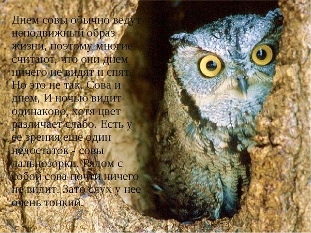 Днем совы обычно ведут неподвижный образ жизни, поэтому многие считают, что о...