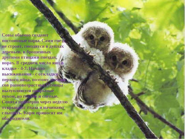 Совы обычно создают постоянные пары. Сами гнезд не строят, гнездятся в дупла...